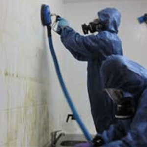 mold removal Auckland